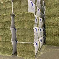 Alfalfa Hay Animal Feed Sundry Lucerne Hay thumbnail image