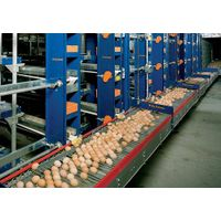 Automatic Egg Collecting Equipment