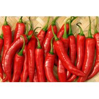 Vietnam fresh hot chilli capsicum