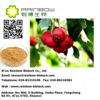 Natural Hawthorn Fruit P.E/ hawthorn extract from China