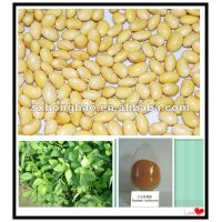 100%Natural 40% Isoflavones fine powder soybean extract