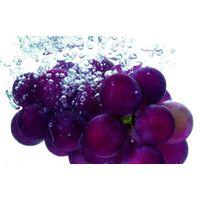 Grape Skin Extract 30% Polyphenols thumbnail image