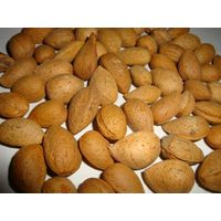 indian almonds