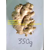 Supply Fresh Lime/ Ginger/ Galangal/ Lemon Grass/ Chilli/ Turmeric with High Quality thumbnail image