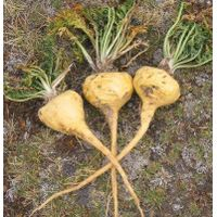 Organic Maca raw powder thumbnail image