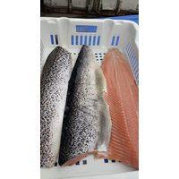frozen Salmon Fish Fillet,Chum Salmon Fillet