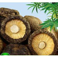 dried black shiitake mushroom