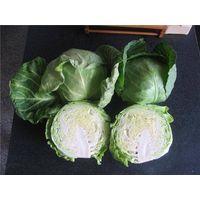 Fresh cabbage thumbnail image