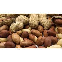 Peanuts (alsharqia) thumbnail image
