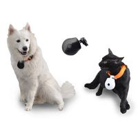 Pet Collar Camera with LCD Screen Displaying Telephone Number Pet Safety Supply