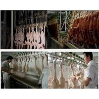 Halal Poultry Slaughter and Abattoir Line in China