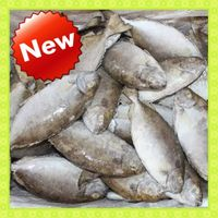 Hot Sale Fresh Frozen Fish Headless Rabbit Fish (Siganus Canaliculatus)