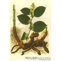 the biggest producer of   Resveratrol Extract in China