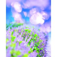 Lifure Aroma Lavender Salt Perfect Scrub thumbnail image