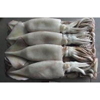 Fresh frozen squid