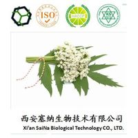 Manufacturer supply Valerian Extract Valeric acid 0.8% powder,Valerian Root Extract