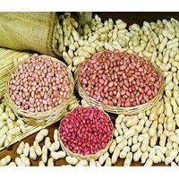 raw peanuts prices