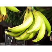 East Java Banana