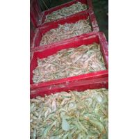 Fresh Jaira White Shrimps thumbnail image