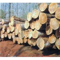 Teak Wood from Thailand thumbnail image