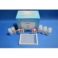 Salbutamol ELISA Test Kit