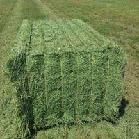 T&H Alfalfa Hay Animal Feeding High Quality thumbnail image