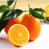 Fresh orange, Navel Orange in good price
