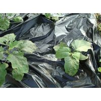 PE Plastic Black Mulch Film thumbnail image