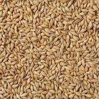 Barley (Animal Feed)