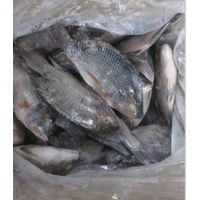 Fresh Frozen Black Tilapia From Factory