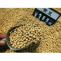 Best Quality Non GMO Soybean Supplier
