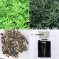 Argy wormwood leaf extract