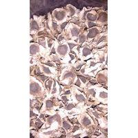 100% Pure Natural Moringa Seed Exporters