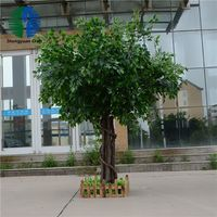 Preserved trunk banyan tree outdoor