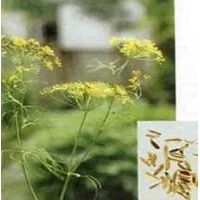Sweet fennel extract