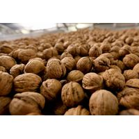 Walnuts of the highest quality Ukraine BEST OFFER
