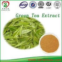Factory Bulk Supply Green Tea P.E. 98% Polyphenols