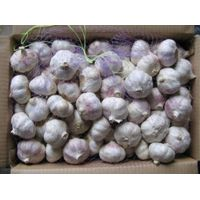 snow white garlic fresh 2011 crop