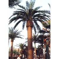 Hot sale high imitation high quality artificial/fake date palm tree indoor & outdoor for decoration