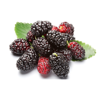 Mulberry Extract, Mulberry juice powder, Mulberry Anthocyanin, manufacturer, Shaanxi Yongyuan Bio