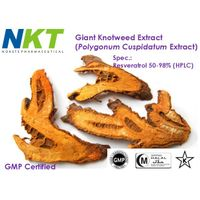 Giant Knotweed Extract (Polygonum Cuspidatum Extract, Resveratrol)