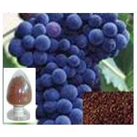 grape seed extract     98%  Proanthocyanidin (OPC) UV