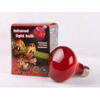 reptile Infrared light bulb thumbnail image