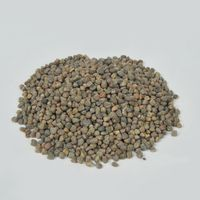 Ethiopian origin Vetch Seed
