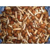 Mushroom in brine/ Champignon,Nameko, Oyster