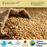 Best Grade Barley Seeds From India thumbnail image