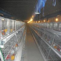 Iron Material Chicken Cage for Layer Chicken