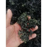 sea moss chondrus crispus irish moss thumbnail image