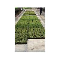 peat fertilizer thumbnail image