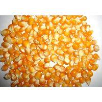 Yellow Feed Corn For Animals thumbnail image